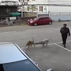 Final inesperado: captan a perros en impactante riña callejera (VIDEO)