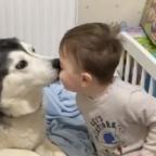2 años de amistad: la historia del perro y su dueño en crecimiento