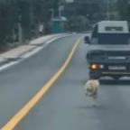 El cariño de madre: perrita conmueve a redes al seguir a cachorros rescatados