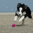 Perro roba juguete en Brasil, se arrepiente y lo regresa (VIDEO)