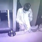 ¿Despacito? Captan a hombre bailando chenchual con su gata (VIDEO)