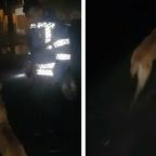 Héroes sin capa: policías de Honduras salvan a perro de morir asfixiado (VIDEO)