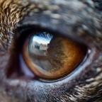 Moony, la historia del perro que se vio por primera vez en un espejo (VIDEO)