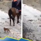 ¿Vaquero? Captan a gato montando a caballo por la cola (VIDEO)