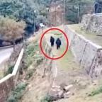 Gorilas vs monos: la iniciativa de policías en India para ahuyentar animales