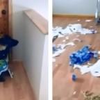 ¿Compras de pánico? Perro destruye el papel comprado por familia para el coronavirus