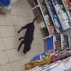 ¿El hambre es can-ija? Captan a perro robando bolsa de croquetas en tienda