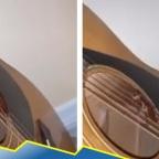 Joven descubre a cucaracha tocando la guitarra en plena cuarentena (VIDEO)