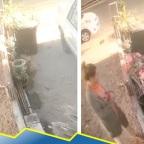 Redes apodan a mujer #LadyMacetas por robo a casa en cuarentena