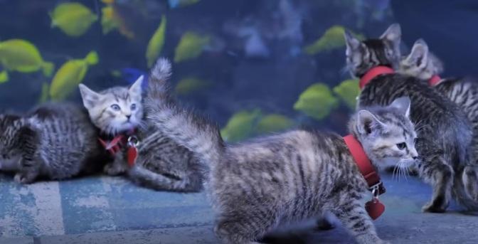 gato 1