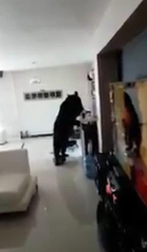oso 1
