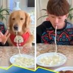 Perro glotón arrasa con todo en competencia de comida (VIDEO)