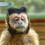 Mono ataca a mujer en plena entrevista de televisión (VIDEO)