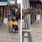 Tiranosaurio Rex espanta a ciudadanos en plena cuarentena (VIDEO)