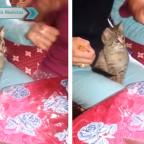 Listo para empacar: gato se hace viral por cortar cinta para regalo (VIDEO)