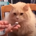 Como un león: gato impacta a redes por reacción al comer helado (VIDEO)