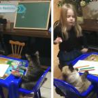 Niña se hace viral por jugar con sus gatos a la escuelita (VIDEO)