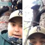 Hombre impacta a redes por casi ser comido por un oso en un árbol (VIDEO)