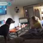Perro se hace viral por detectar  fantasma en casa y alertar a dueña (VIDEO)