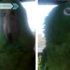 Loro demuestra de forma épica que odia el reguetón (VIDEO)