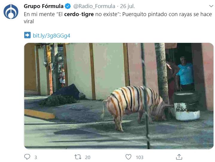 cerdo 1