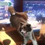 Perro conmueve a redes por gruñir para que lo dejen ver la televisión