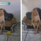 Gato se hace viral por sentarse como humano en un minisillón (VIDEO)