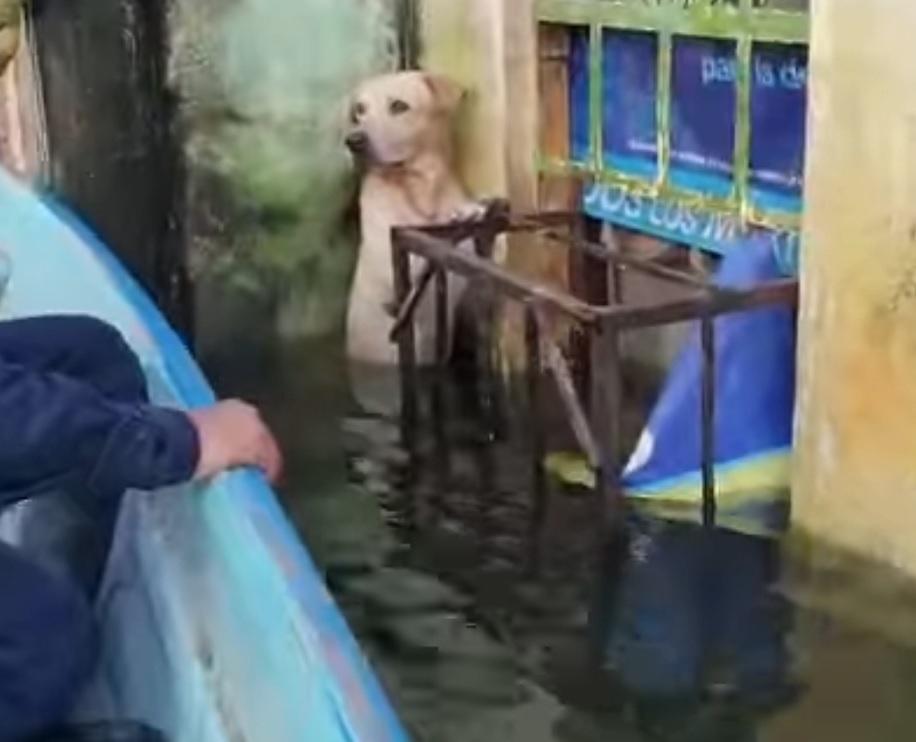 militares-rescatan-perrito-atrapado-en-inundaciones-tabasco