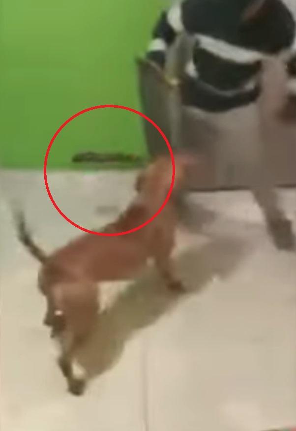 video-de-perro-con-machete-en-la-boca