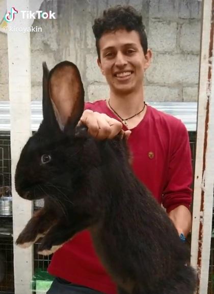 conejo grande 2