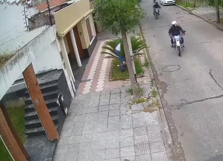 ladrón se esconde en palmeras 1