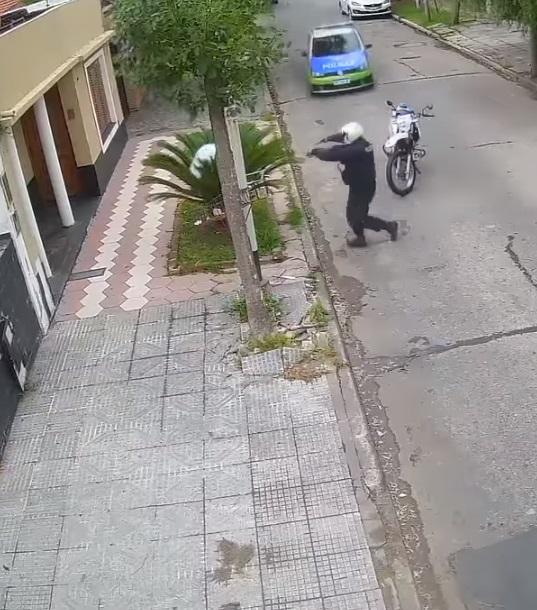 ladrón se esconde en palmeras 2