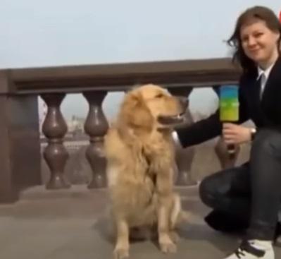 perrito roba microfono 2