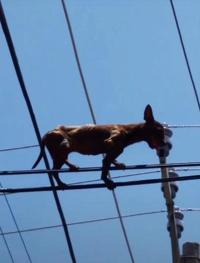 perrito en cables 3