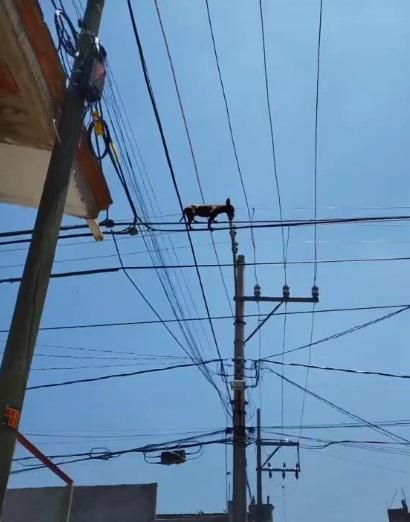 perrito en cables