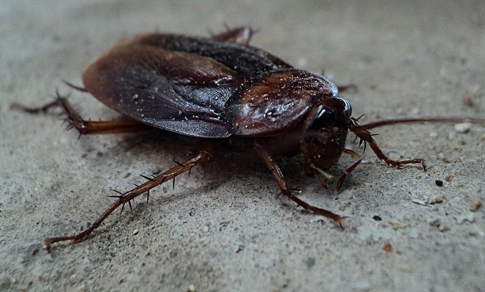 cucaracha 3