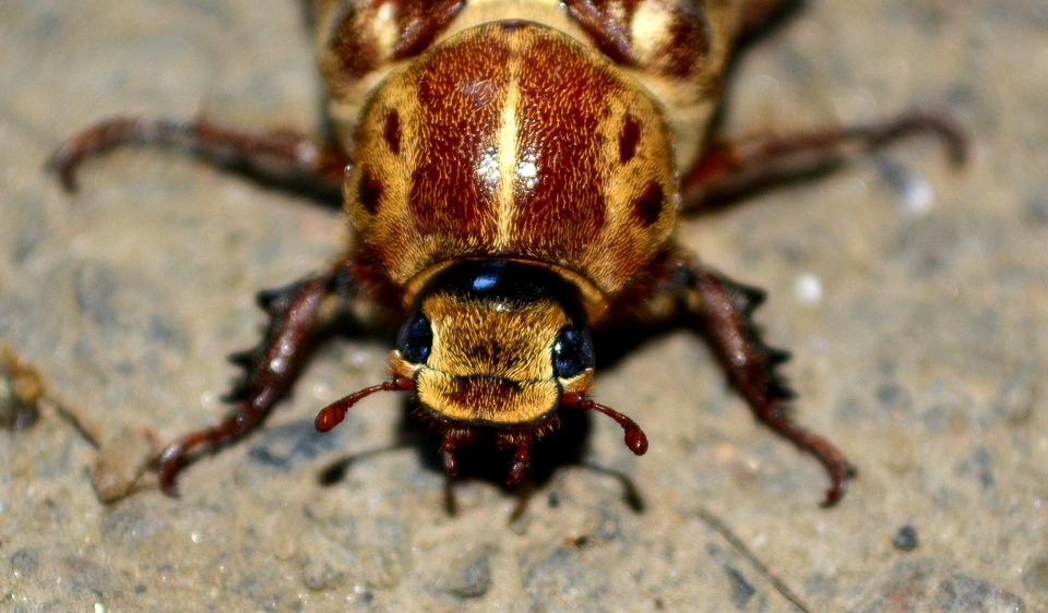 cucaracha 45