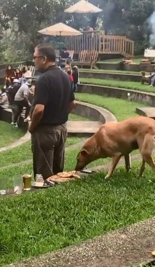 perro 3