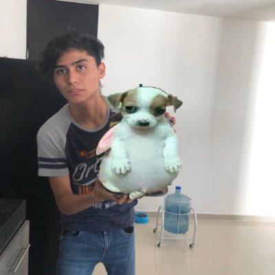 perro panson 12