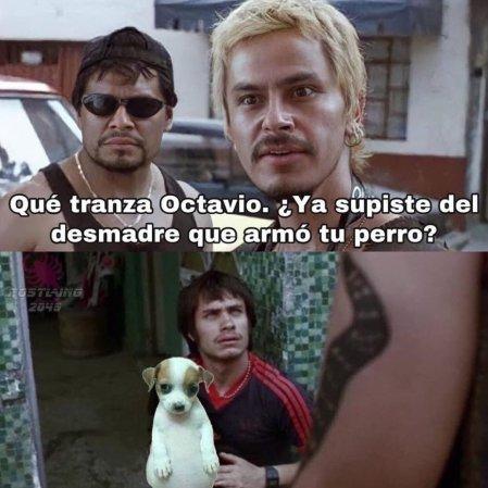 perro panson 3