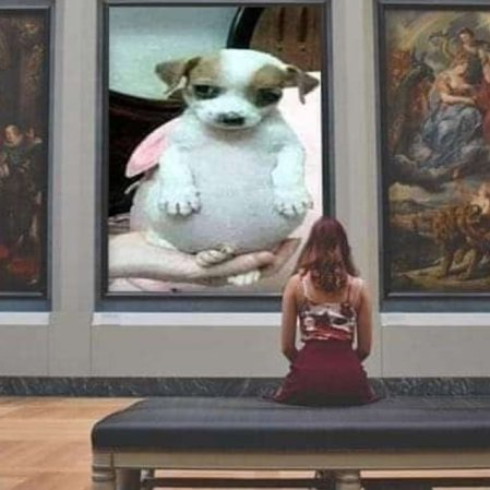 perro panson 8