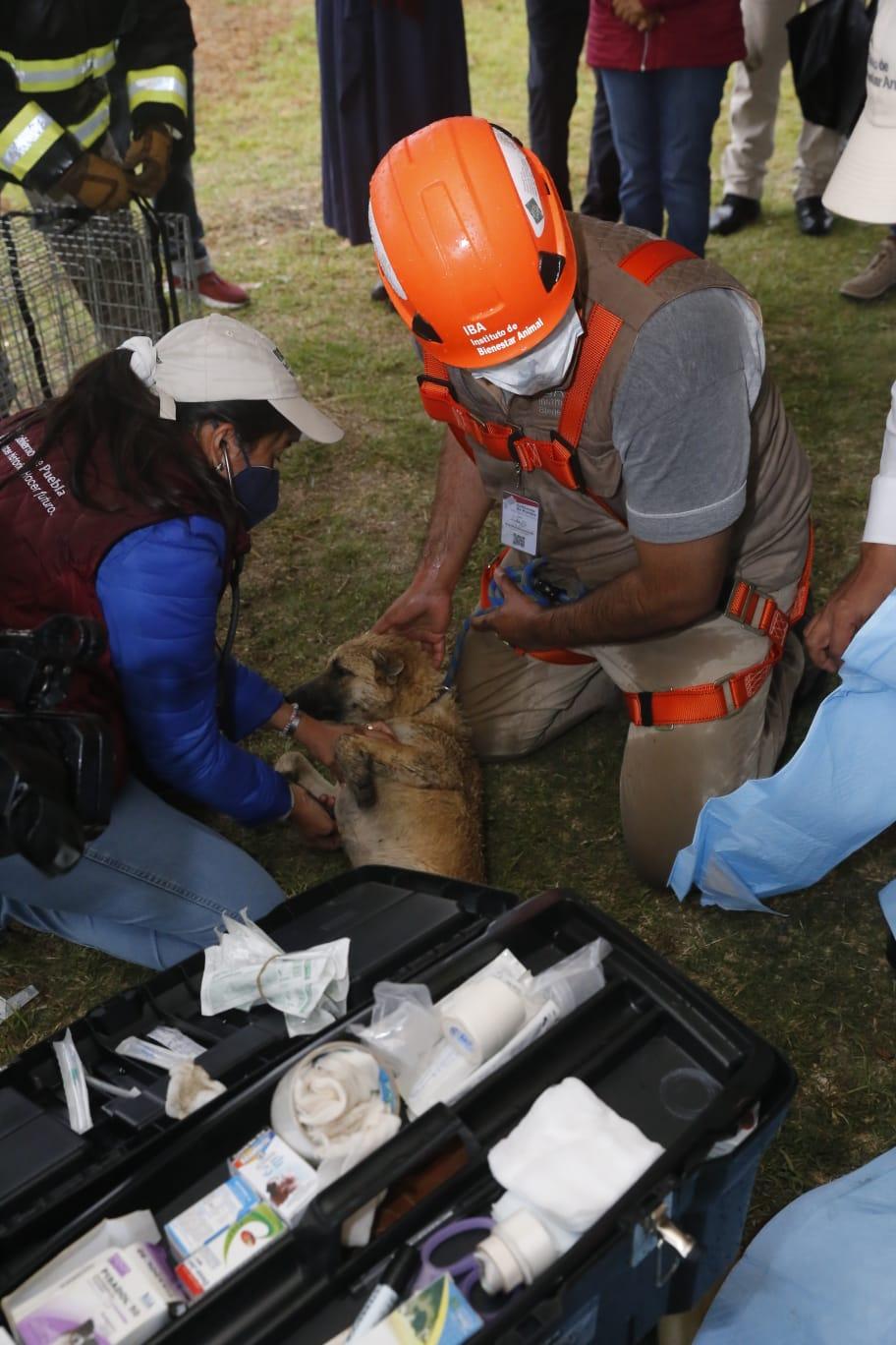 rescate de perros en socavon 4
