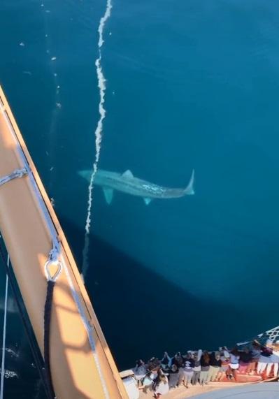 tiburon gigante 2