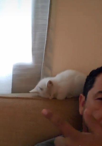 gatito 3