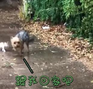 perrito 1